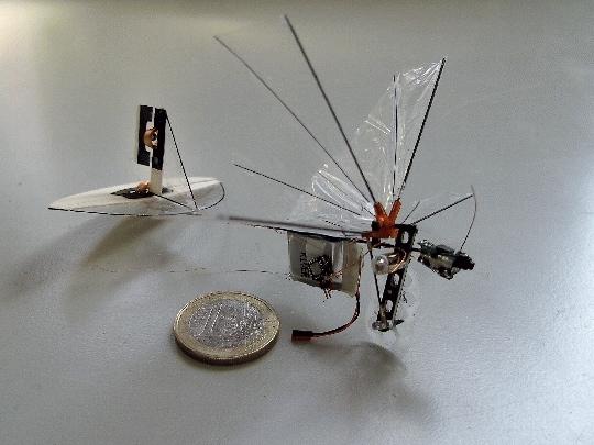 Fly_tud
